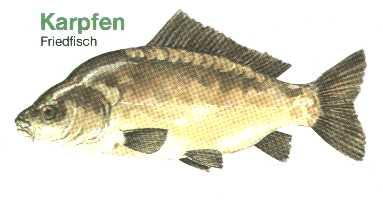 Karpfen steckbrief for Steckbrief karpfen